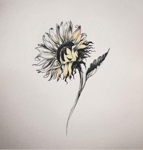 backgroundsunflower